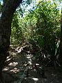 Algarve (22614109405).jpg