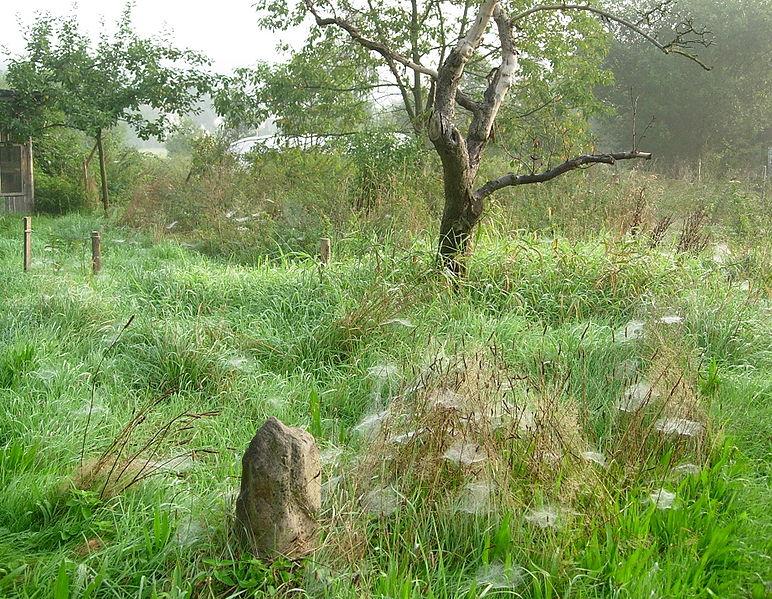 Altweibersommer, aufgenommen in Niedersachsen im September 2006, trees and gras with cobwebs