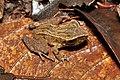 Amphibians (14670039378).jpg