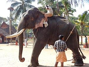 Thrikkadavoor - Thrikkadavoor Sivaraju