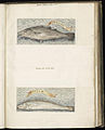 Animal drawings collected by Felix Platter, p1 - (120).jpg