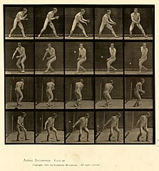 Animal locomotion. Plate 288 (Boston Public Library).jpg