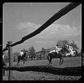 Année 1963. Club hippique à Vigoulet Auzil (31) (1963) - 53Fi5054.jpg