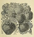 Annual catalogue and price list - small fruits, trees, plants and vines, fruit and ornamental trees (1895) (18397636026).jpg