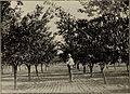 Annual report of the Fruit Growers' Association of Ontario, 1902 (1903) (14583294108).jpg