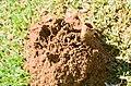 Ant hill in pitawala plains.jpg