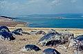 Ardahan Yaylası 09 1984 Çıldır Gölü östlich Çıldır.jpg