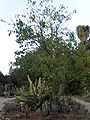 Arizona Cactus Garden 046.JPG