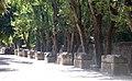 Arles Alyscamps 10.jpg