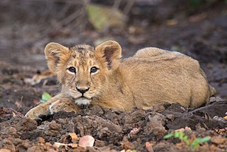 Wildlife of South Asia Wikimedia list article
