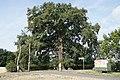 Astbruch beim Lausbaum im Sommer 2018 03.jpg