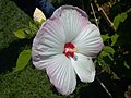 Asus Flower 033 Nezahat Gokyigit.jpg