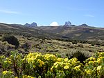 At 3600 m ascending to Mt Kenya.JPG