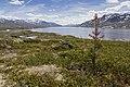 Aursjøen, Nesset, 2013 June - 2.jpg