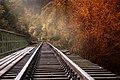 Autumn (85539805).jpeg