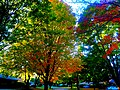 Autumn Colors in Madison - panoramio (2).jpg