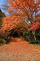 Autumn foliage 2012 (8252574085).jpg