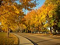 Autumn on CSU campus, Ft Collins.jpg