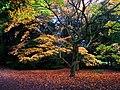 Autumn show - geograph.org.uk - 117983.jpg