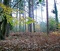 Autumnal forest floor - geograph.org.uk - 1576541.jpg