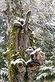 Bäume Schauinsland (Freiburg) jm22314.jpg