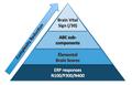 BVS pyramid 1.png