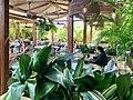 Back garden at Hunter & Scout Café, Graceville, Queensland.jpg