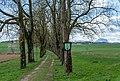 Bad Wimsbach Neydharting Kastanienallee-2273.jpg