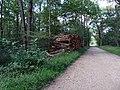 Balade en Forêt de Verrières le 20 août 2017 - 014.jpg