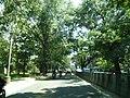 Bangalore street trees and traffic 2.jpg