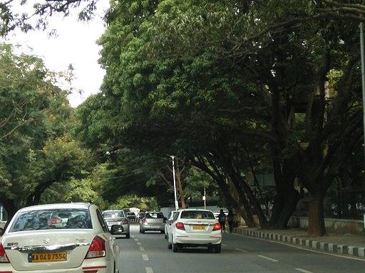 Bangalore street trees and traffic 3