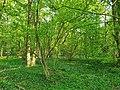 Barn Coppice, Graylands Horsham. Woodland scene.jpg