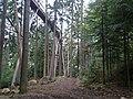 Baumwipfelpfad - panoramio.jpg
