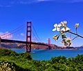 Beautiful Golden Gate Bridge.jpg