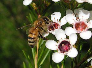 a sweet bee!