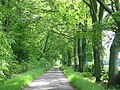 Beech lined lane, Gairney - geograph.org.uk - 19435.jpg