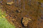 Beekdal Linde Bekhofplas. Een waardevol natuurterrein van Staatsbosbeheer in de provincie Friesland 26.jpg