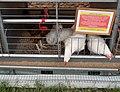 Belagro-2019 (poultry) 004.jpg