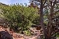 Bell Trail (25165639108).jpg