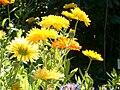 Benkid77 Garden Flowers1 070807.JPG