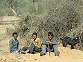 Bergers du Rajasthan (Inde) (8425439335).jpg