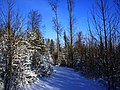 Best Weather In Winter - panoramio.jpg