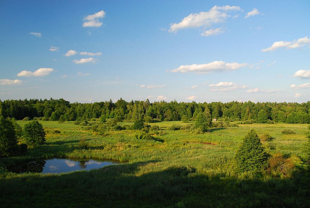 Hutan Campuran Eropa Tengah