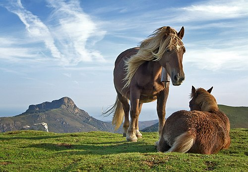 Horses on Bianditz mountain, in Navarre, Spain. Behind them Aiako mountains can be seen.