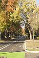 BikeLane Green (15547750708).jpg