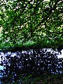 Biotopo Rio dei Gamberi Krebsbsch Alto Adige Lana Italia Photo by Giovanni Ussi - 19.jpg