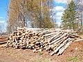 Birch logs.jpg