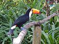 Bird in Sentosa.jpg