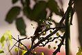 Birds 099 (6789337790).jpg