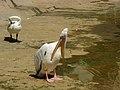 Birds Garden of Isfahan (44).jpg